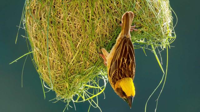 Captivating bird nest creations