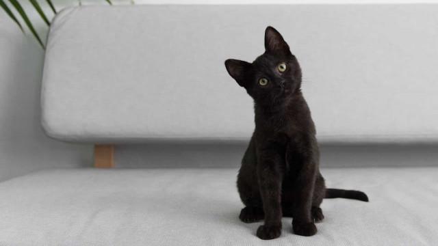 Gatos pretos: superstições e simbologia