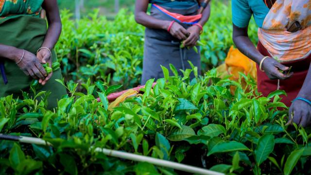 Så här kan du leva på ett sätt som är mer Fairtrade