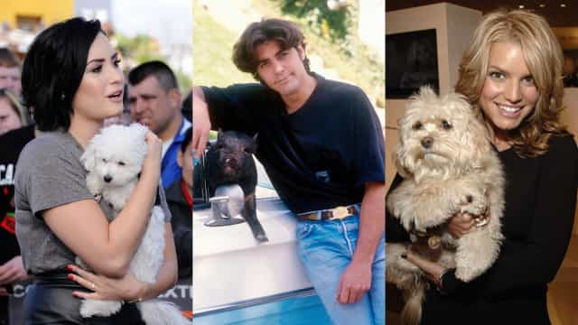 Discover the most tragic celebrity pet deaths