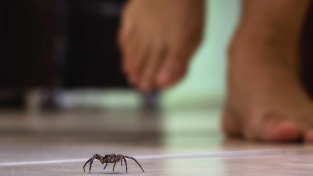 Mördarinstinkt: varför alla vill döda spindlar