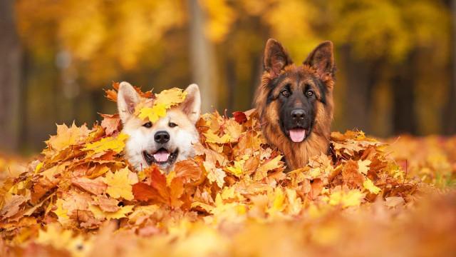 Animales adorables disfrutando del otoño