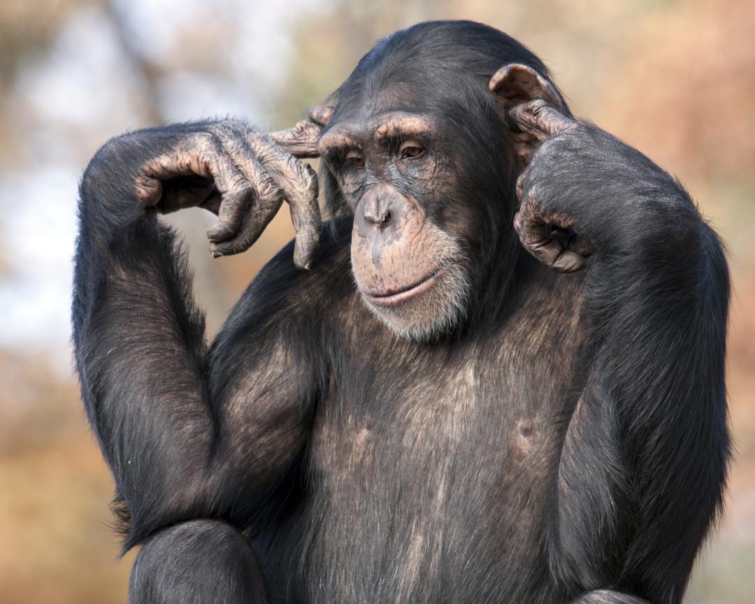 die intelligentesten tiere