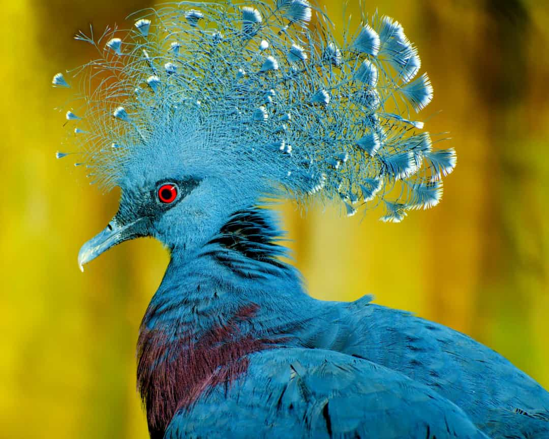 Flights of fancy: the most colorful and exotic birds on ...