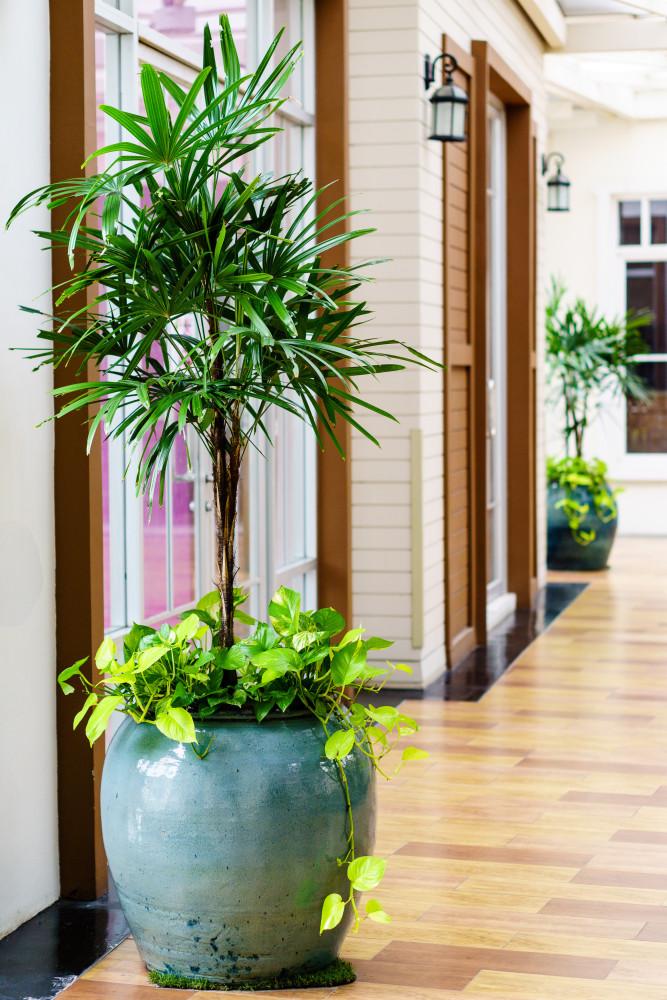 Die besten Zimmerpflanzen für Ihre Wohnung