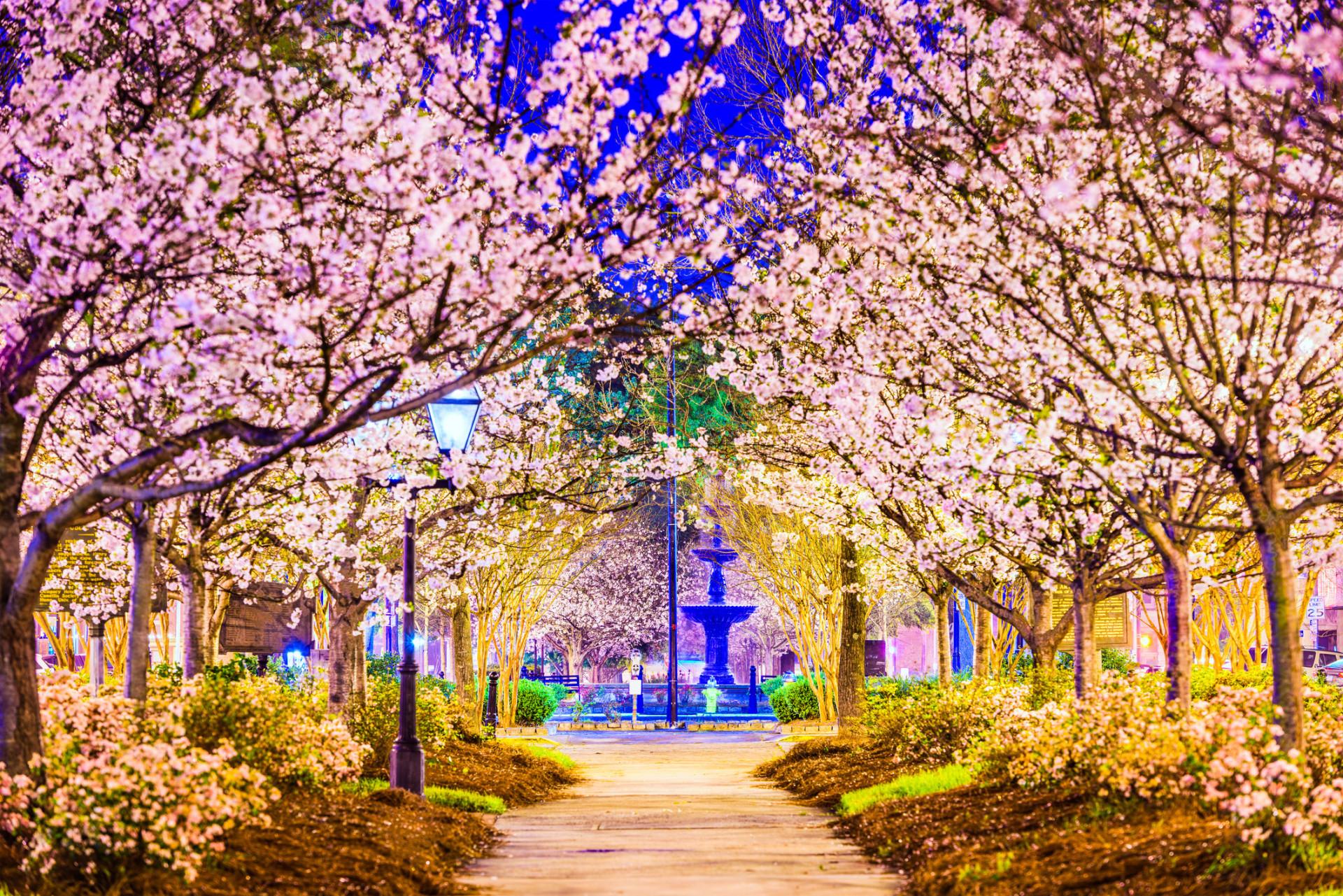 De leukste lente bestemmingen van 2019
