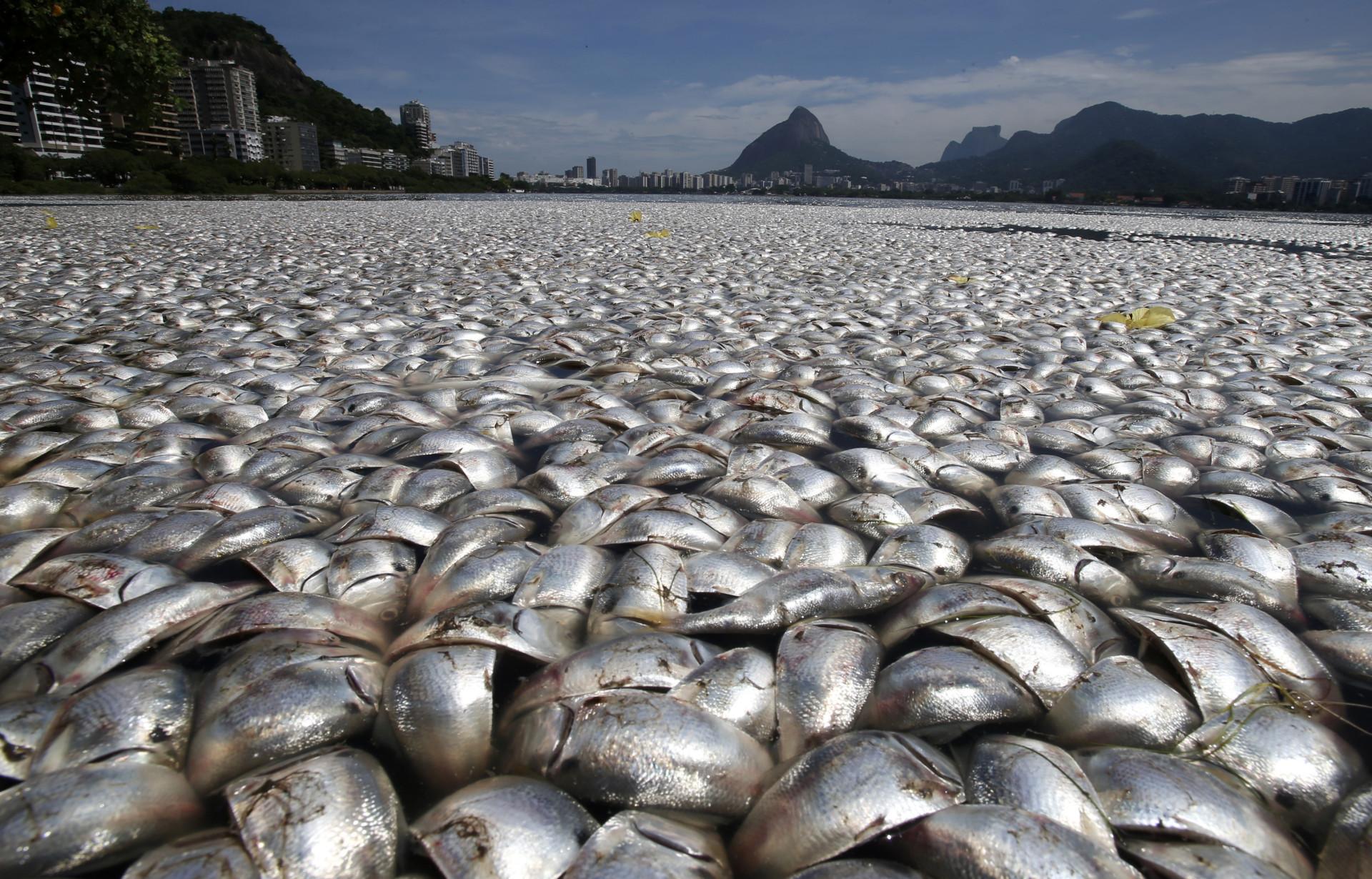 Müllkippe Meer: Fatale Folgen der Umweltverschmutzung