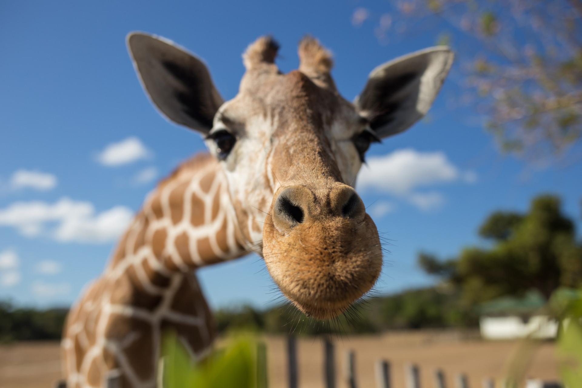 Upeat safarit, jotka löytyvät muualta kuin Afrikasta!
