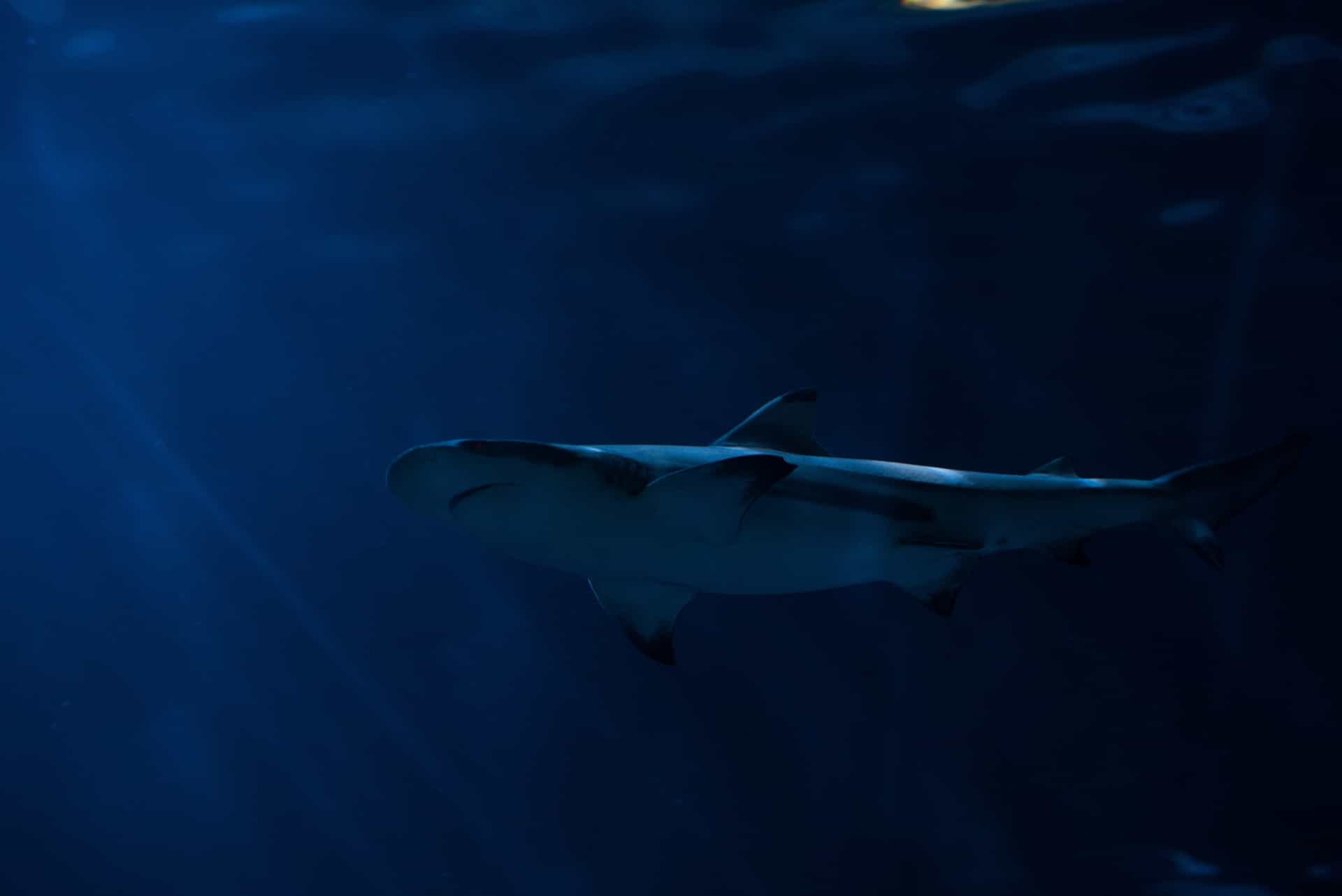 Jaws: places on earth with the most shark attacks