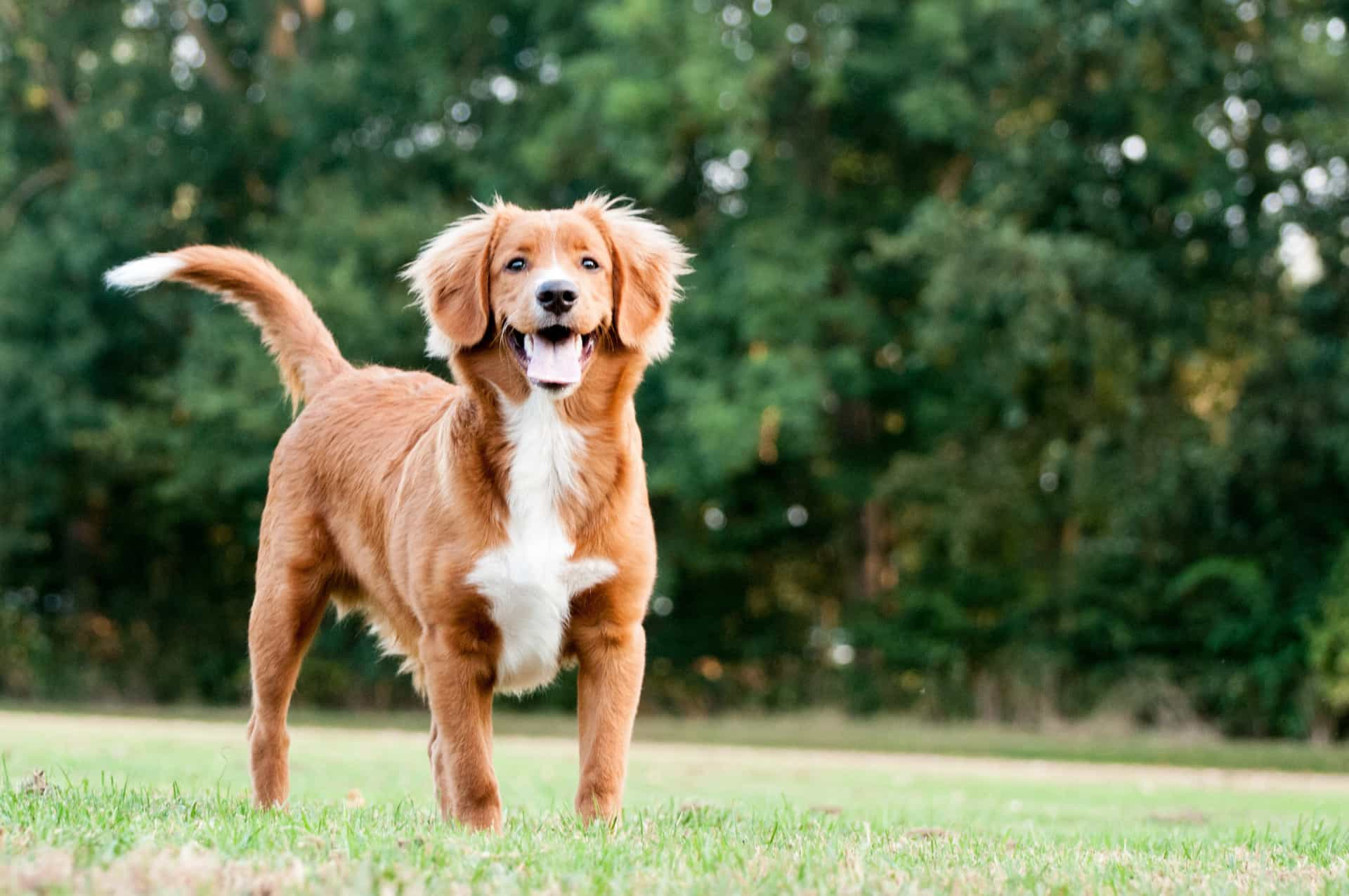 As raças de cães que melhor se adaptam às famílias
