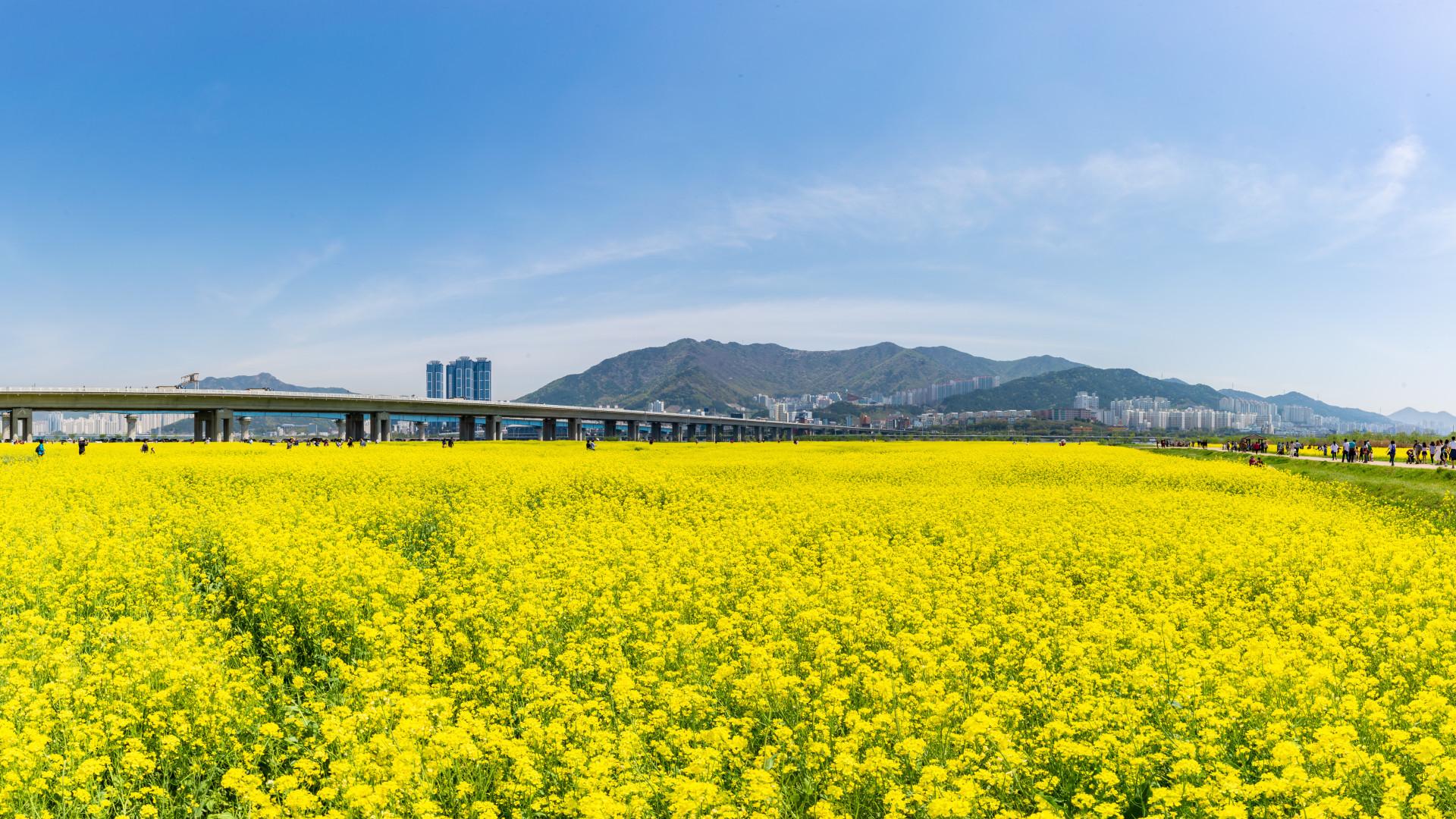 Insider Tips: Busan, South Korea is your next dynamic destination