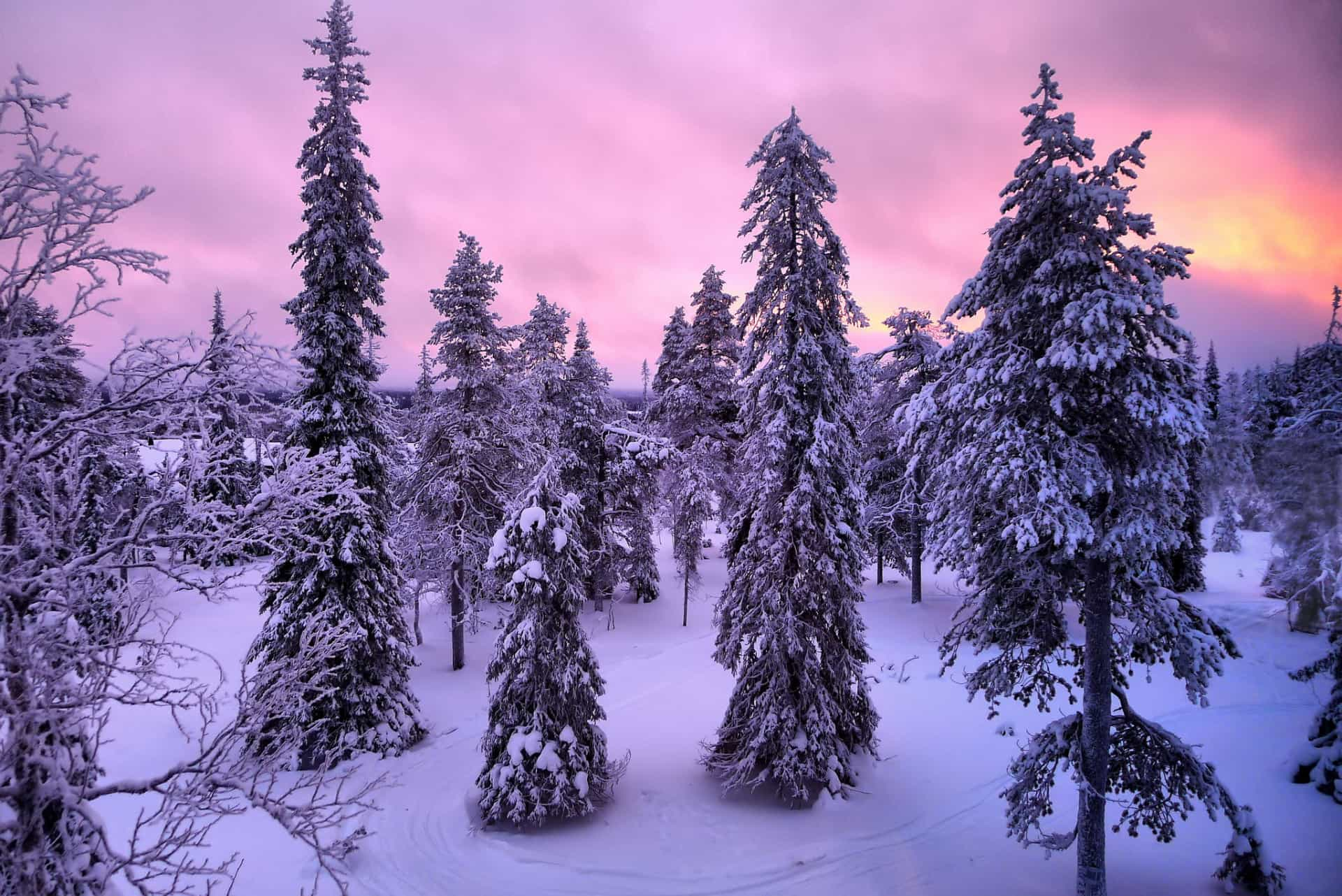 Let's go to Lapland, a winter wonderland!