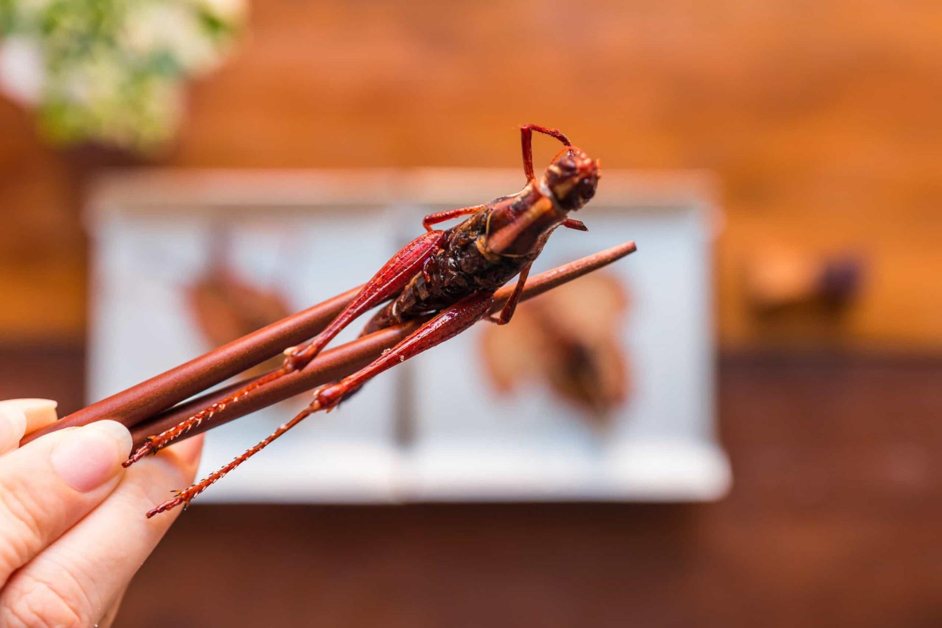 As razões que o podem convencer a comer insetos
