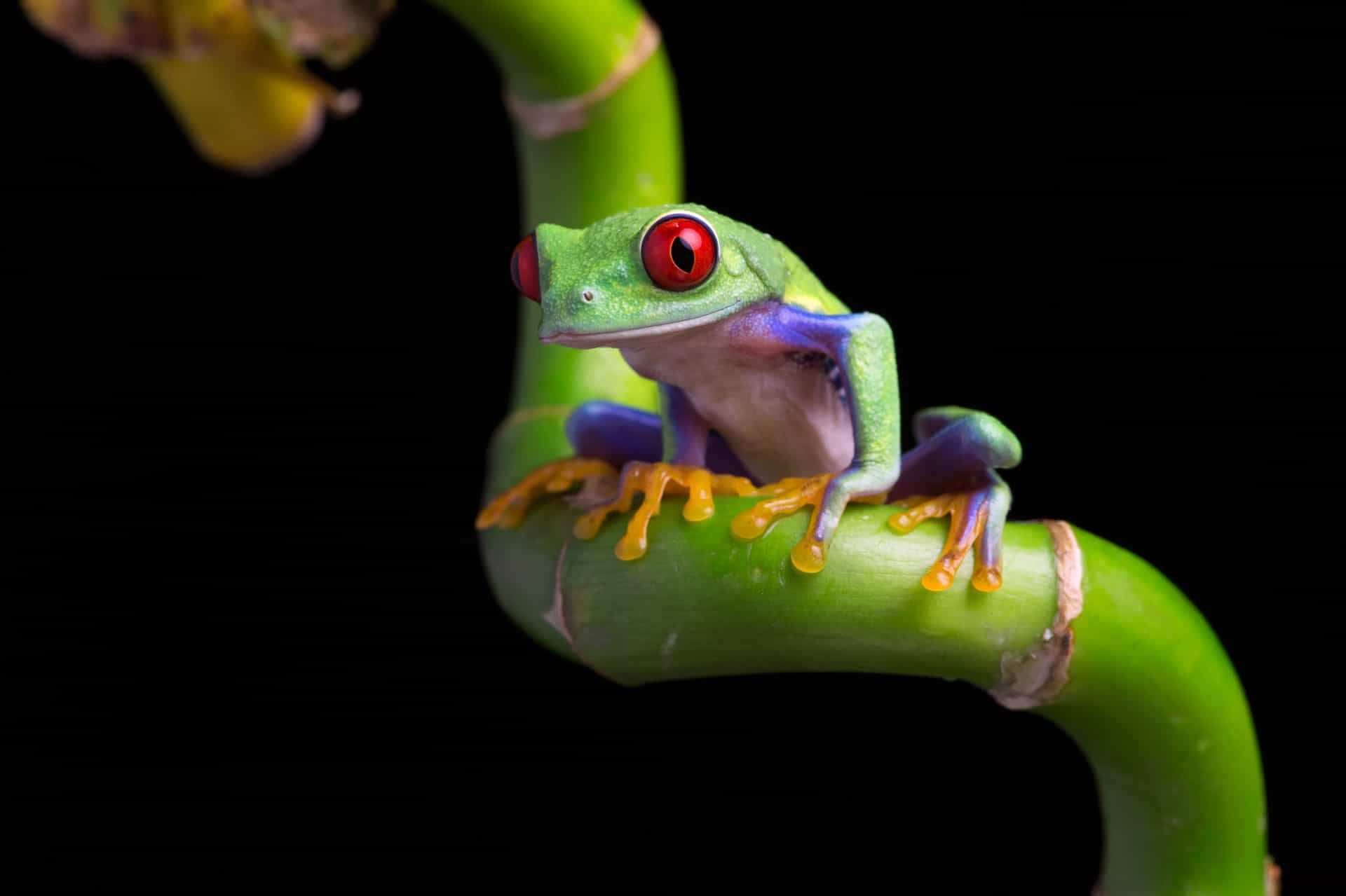 Nature's real-life zombies you never knew existed