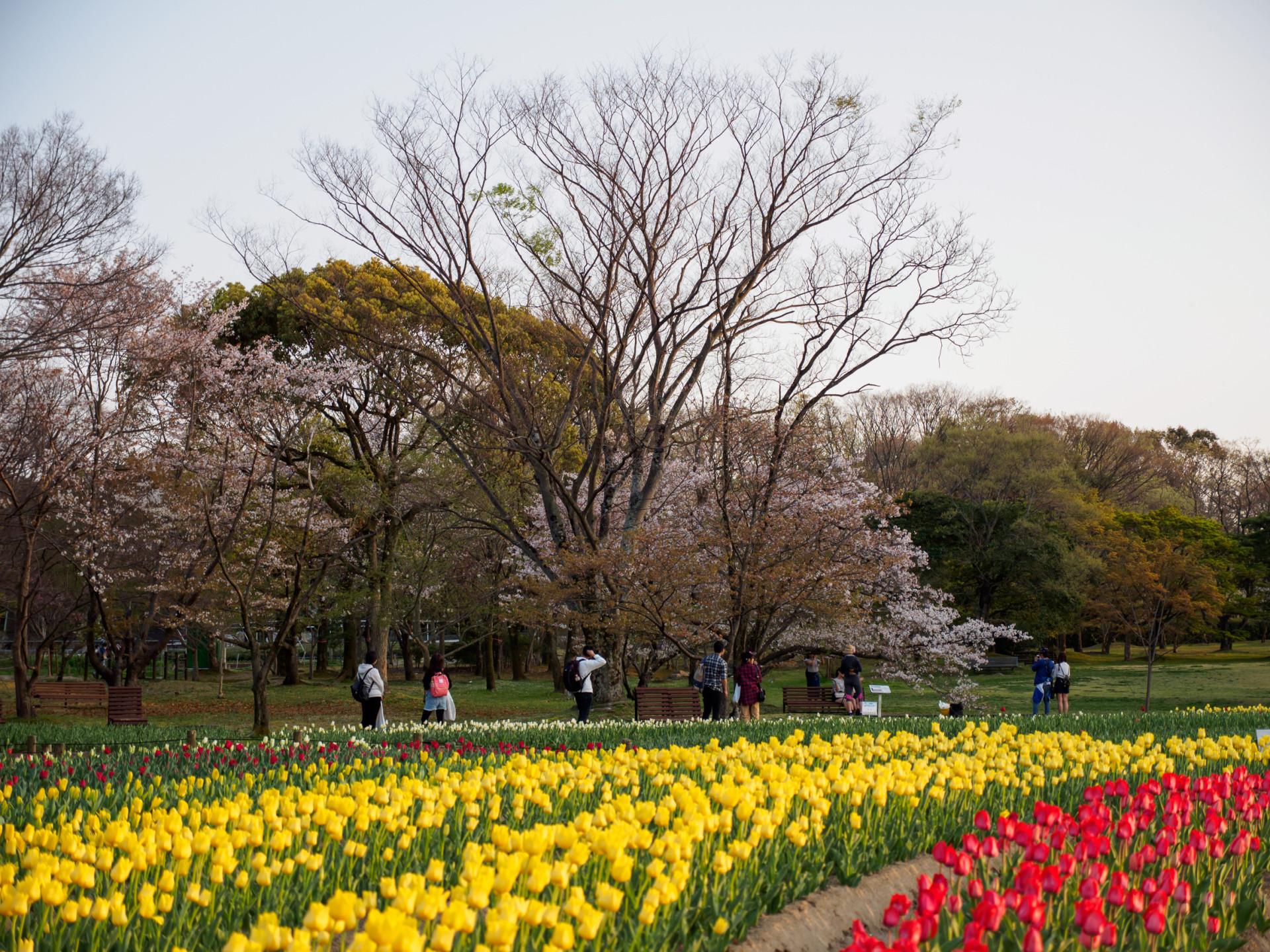 De allermooiste bloemenvelden ter wereld