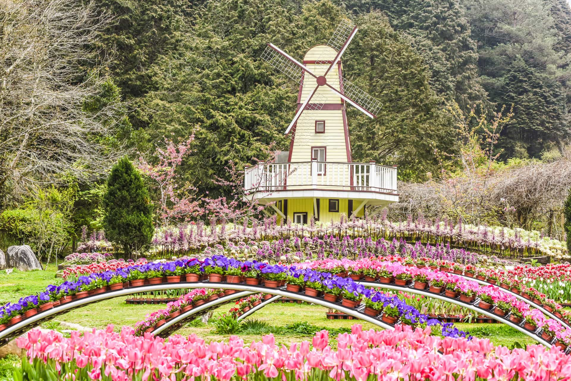 The world's most beautiful flower fields to visit