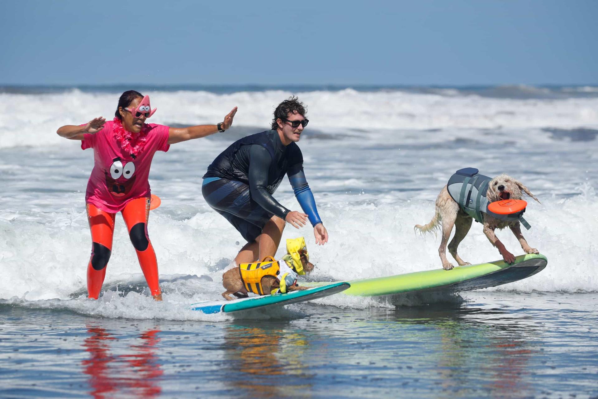 dejtingsajt för surfare